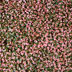 Artificial Landscape Leaves Hedge A001 Pink