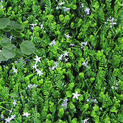Artificial Landscape Leaves Hedge A050
