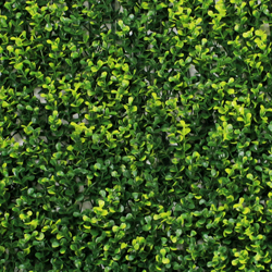 Artificial Hojas Verdes Hedge G0602A006yellow