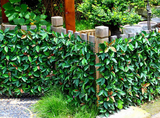 Artificial-hedges-for-plant-screen-and-decor7